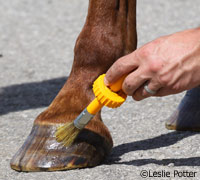 hoof-dressing